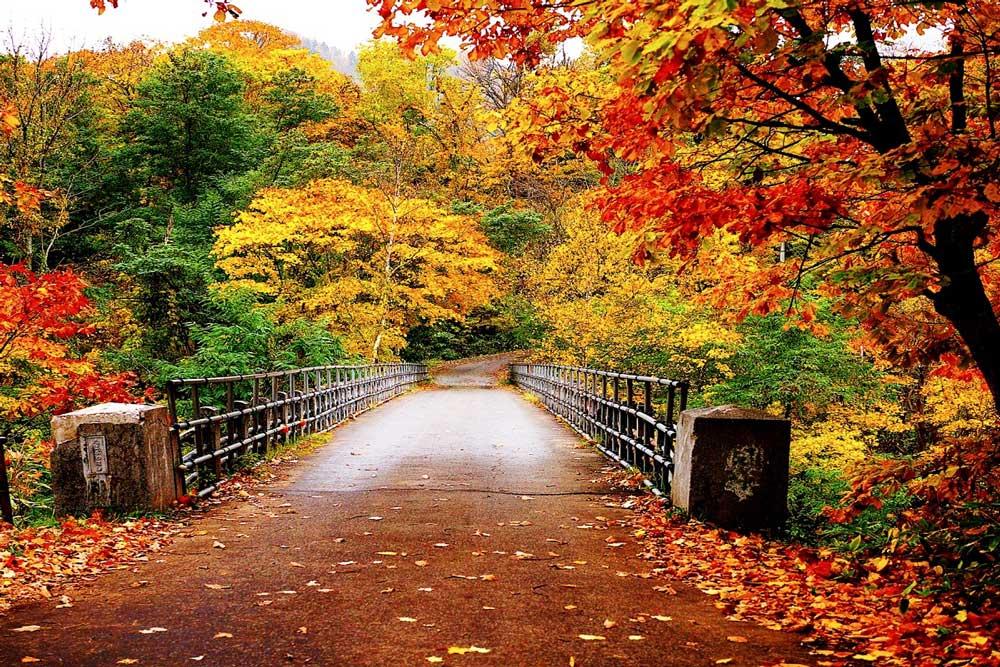 سفر به شمال در پاییز