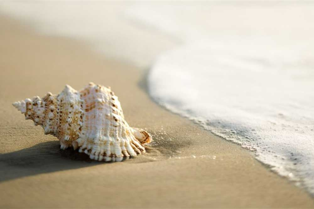 ساحل صدف بهترین سواحل شمال