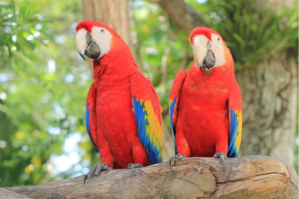 باغ پرندگان انزلی