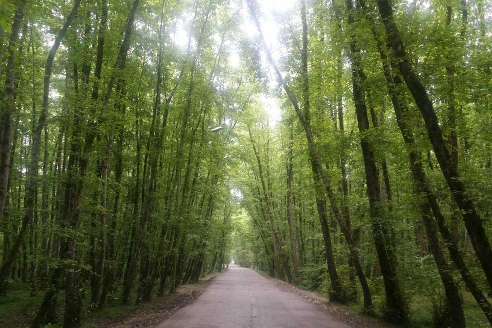 مسیر جنگلی ساحل گیسوم، بهترین سواحل شمال