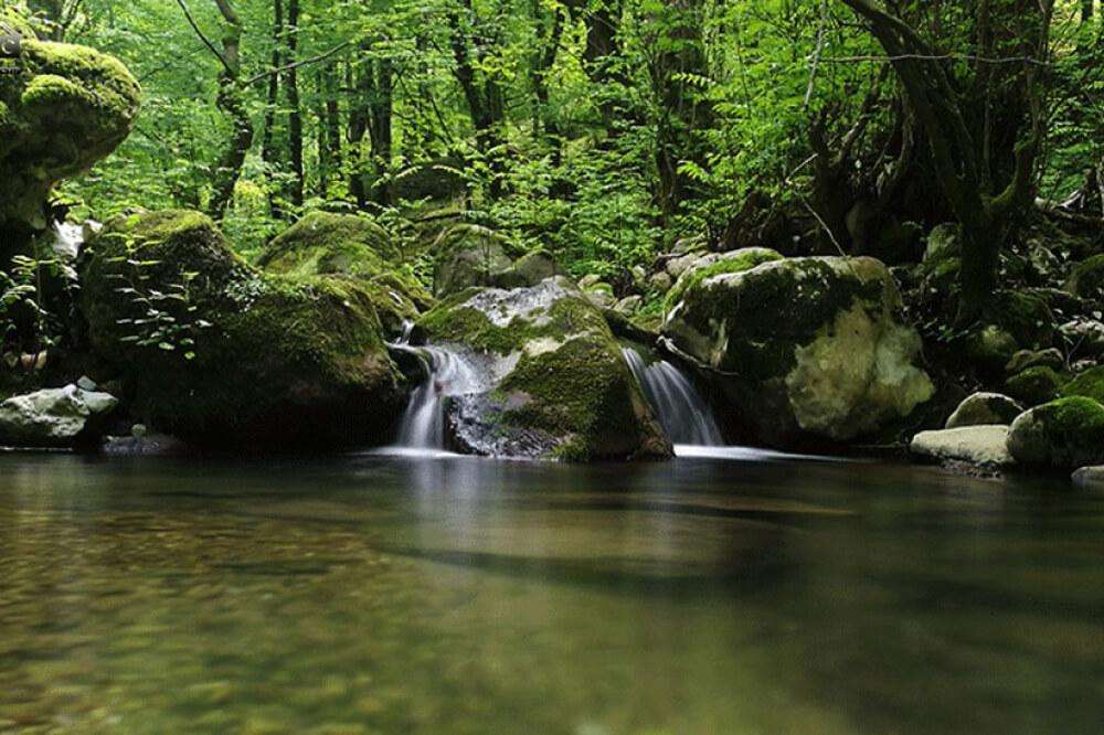جنگل تیلا کنار متل قو